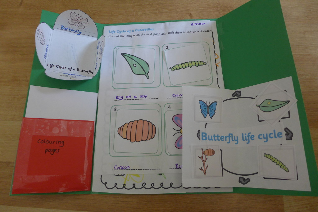 butterfly lifecycle lapbook