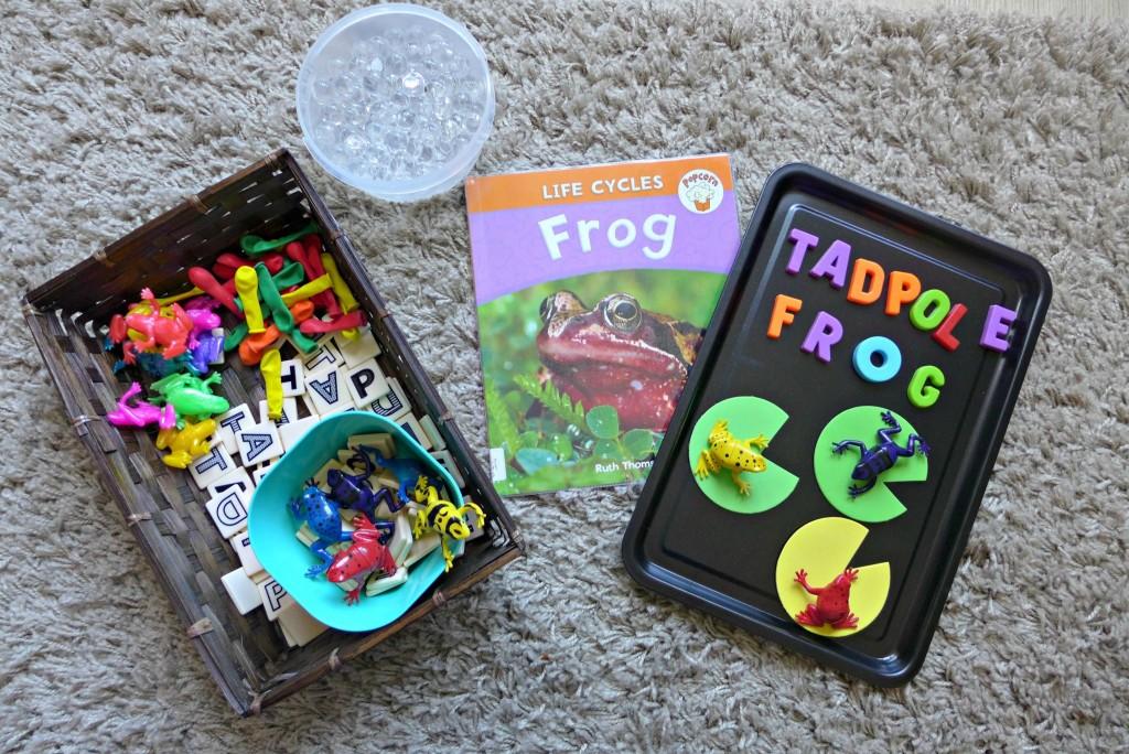 Frog Life Cycle Tuff Spot