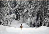 five ideas for homemade snow