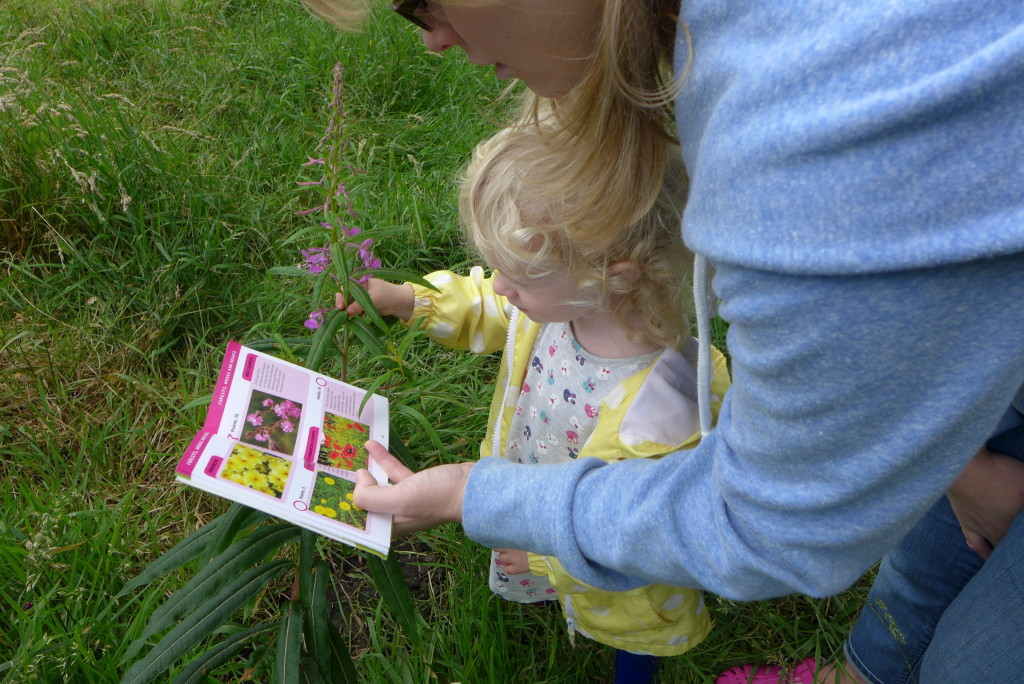 I spy nature book red campion