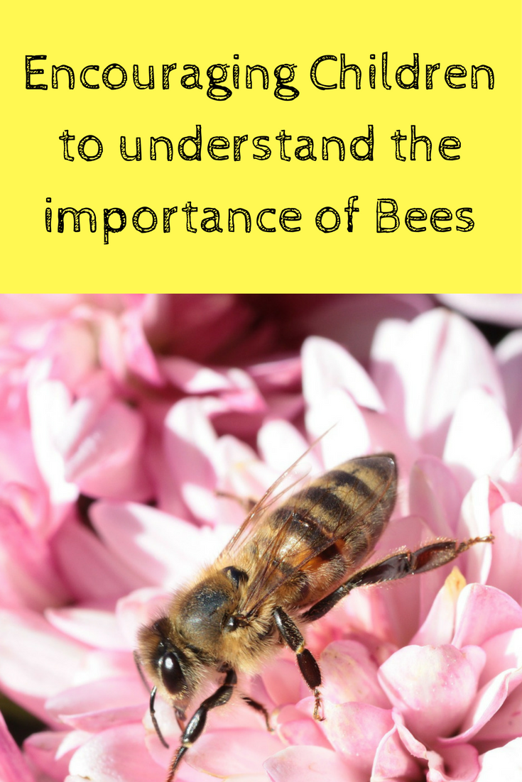 ideas to help children understand the importance of bees