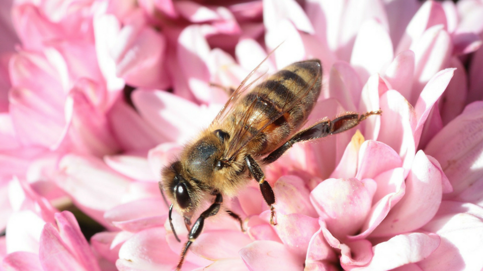 Helping Children Understand the Importance of Bees