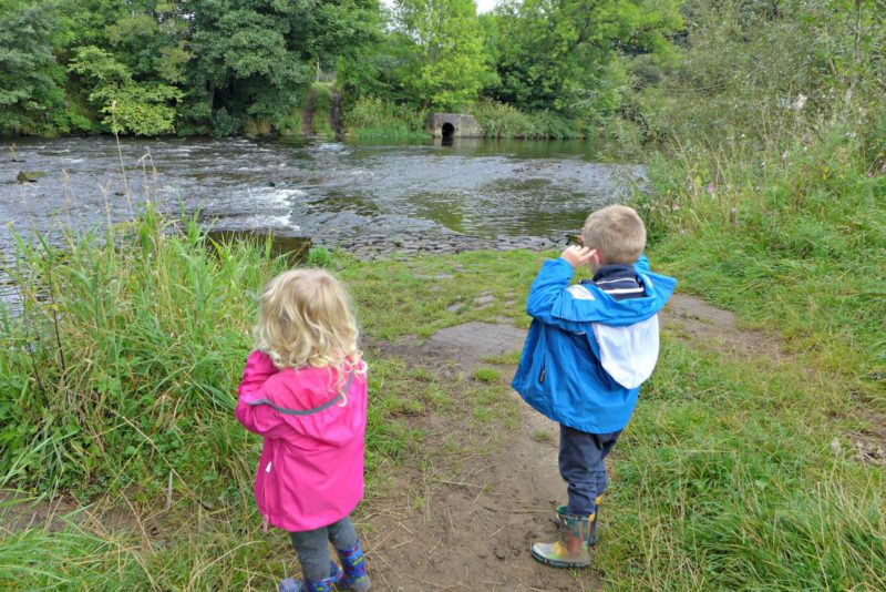Exploring Nature with children seed dispersal